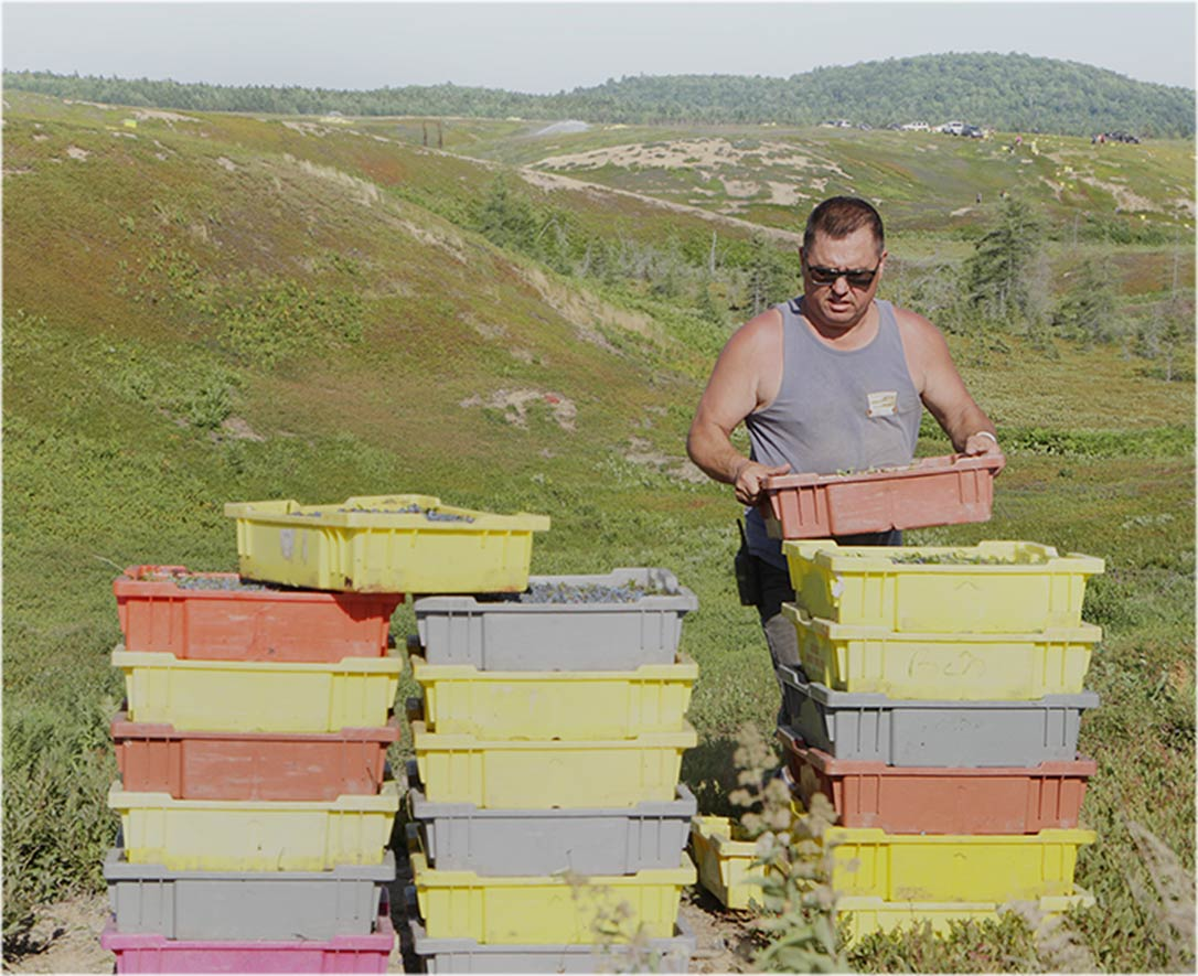 Alex and blueberry boxes